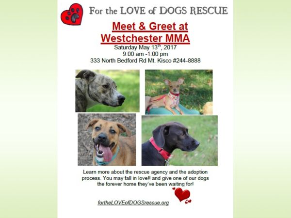 May 27 dog rescue meet greet at westchester mma fit chappaqua dog rescue meet greet at westchester mma fit m4hsunfo