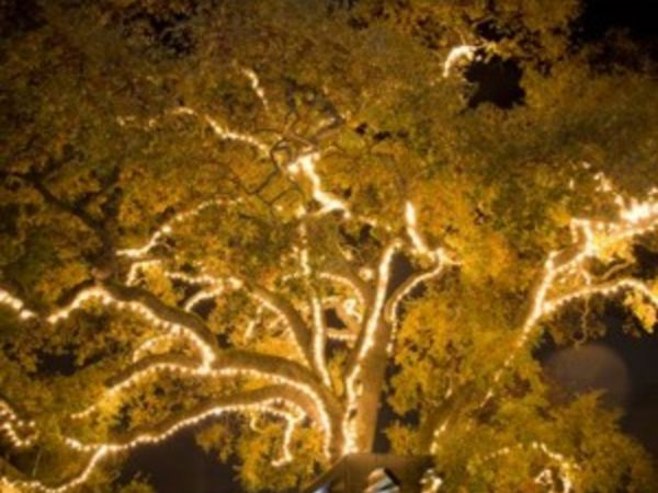 Nov 24 Holiday Lighting Of Old Oak Tree With Father