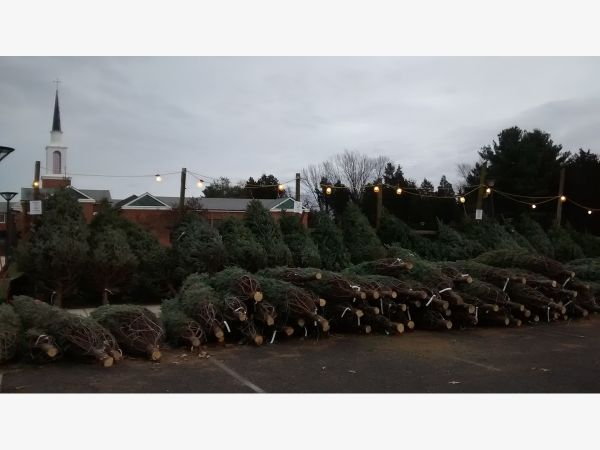 trinity christmas tree sales - Sales On Christmas Trees