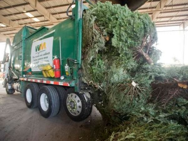 Dec 31 Go Green Recycle Your Holiday Tree This Season Del Mar Carmel Valley Ca Patch