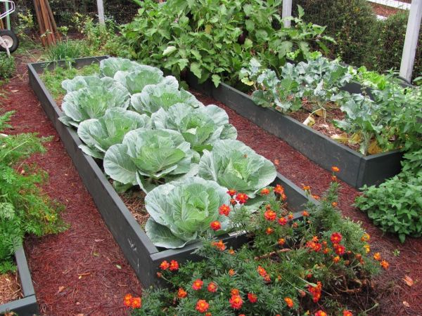 Sep 21 Raised Beds And Garden Fences Free Monthly Gardening Class Athens Ga Patch