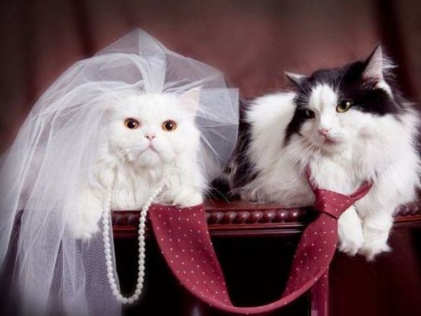 May 20 westchester feline club cat show wedding party southeast westchester feline club cat show wedding party junglespirit Images