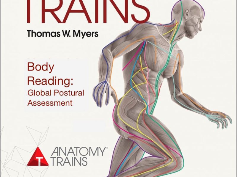 Fine Anatomy Trains Dvd Composition - Anatomy And Physiology Biology ...