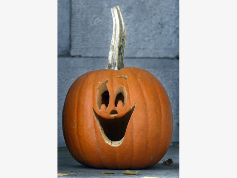 How not to grow a pumpkin and other gardening tips   wtop.