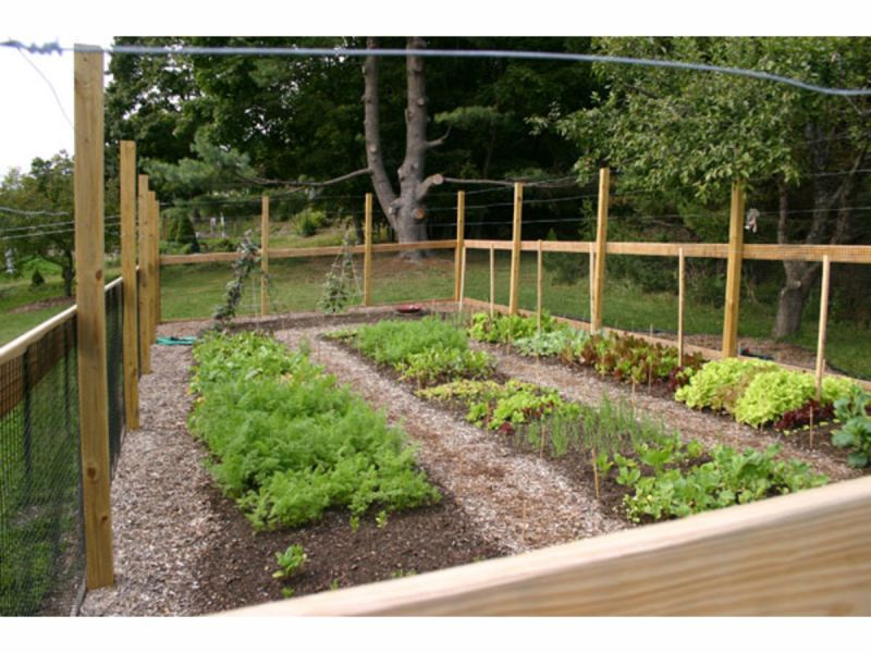 Image Result For Vegetable Gardening In Georgia Calendar