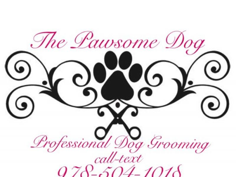 Dog Grooming Concord Nh