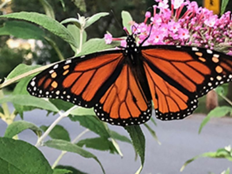 Gardening with Native Plants: Why they are so very important.