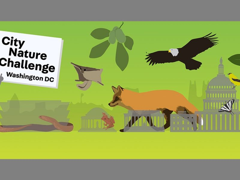 City Nature Challenge 2019 @ Wolf Trap National Park