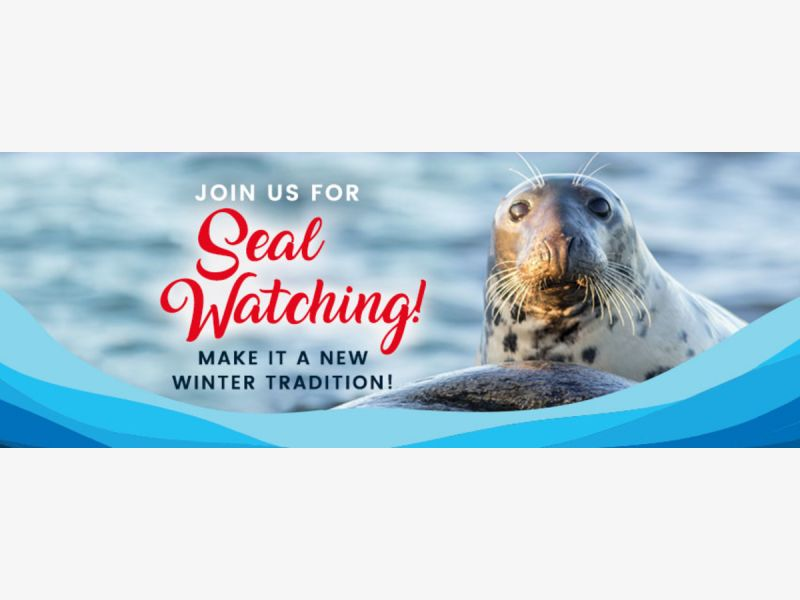 Seal Watching Tour