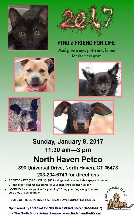 Jan 8 | New Haven Animal Shelter Adoption Event | New Haven, CT Patch